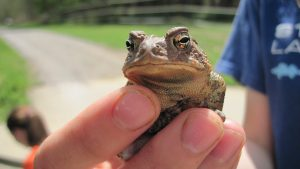 Toad (2)