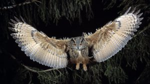 great-horned-owl-to